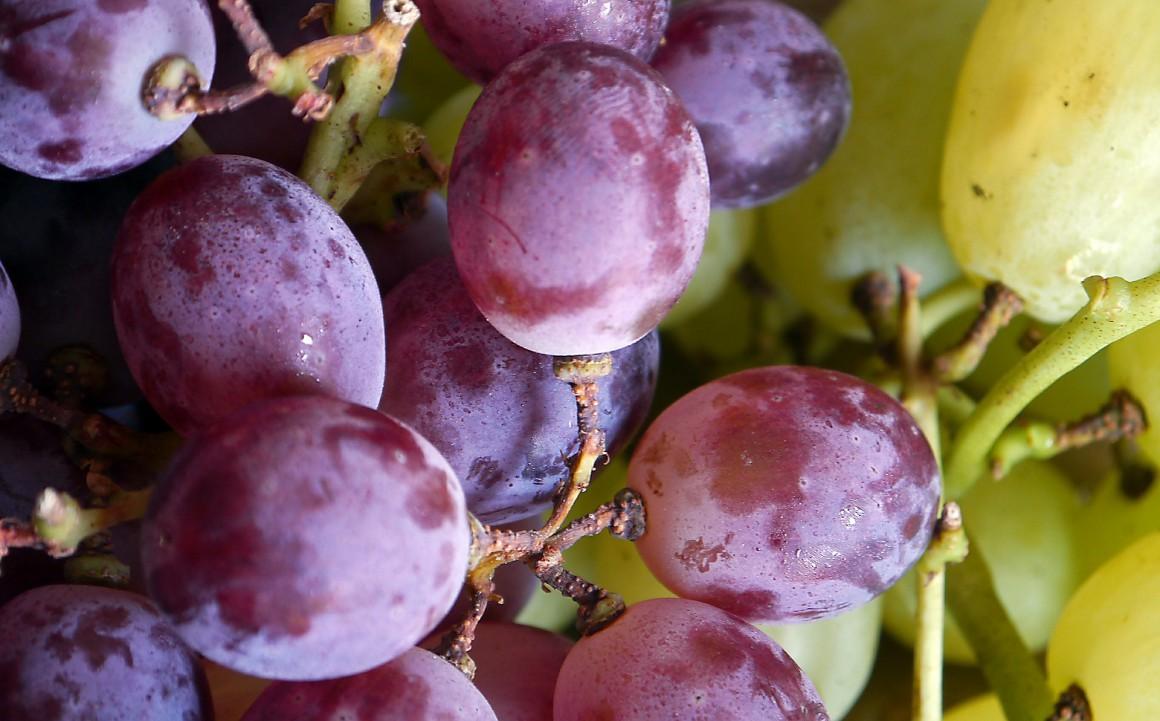 grapes-498684_1920