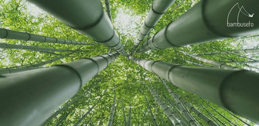 bambuseto