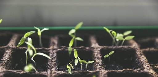 plant-1474807_640 (1)