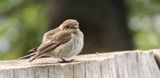 bird-gdc70080ae_640